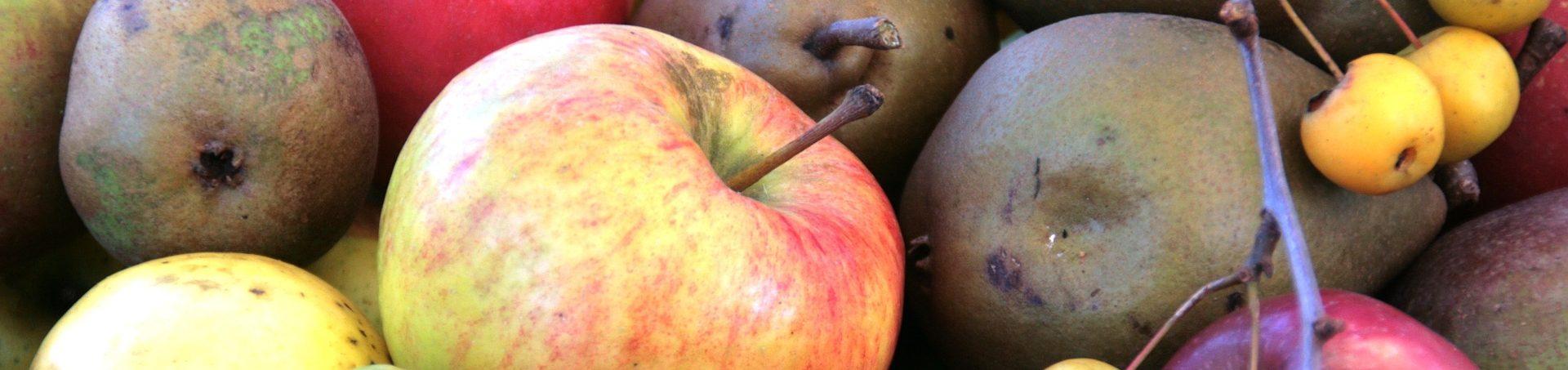 rozbor-ovoce