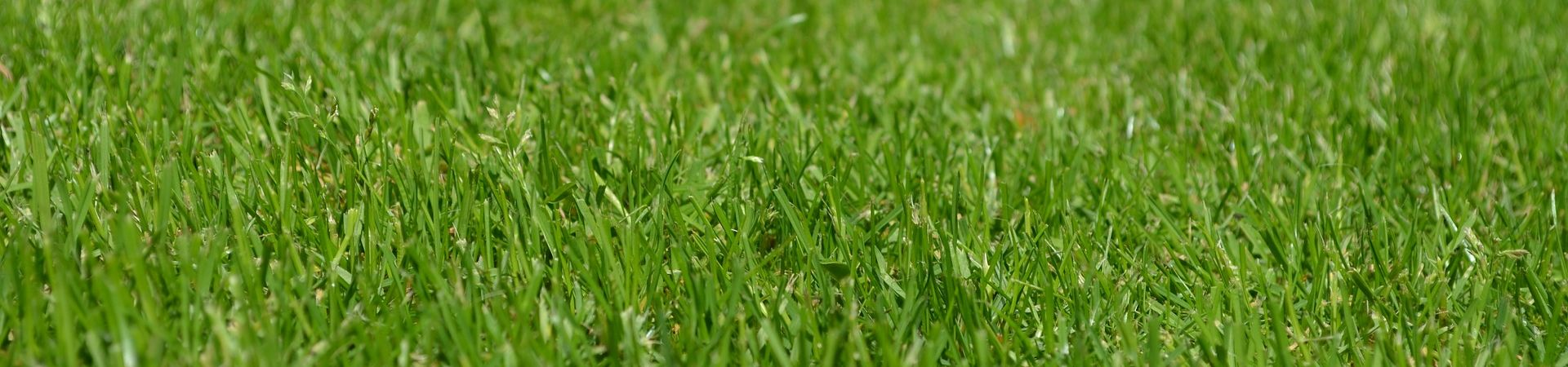 travnikova-hnojiva